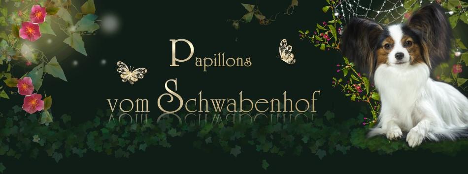 Schwabenhof Papillons